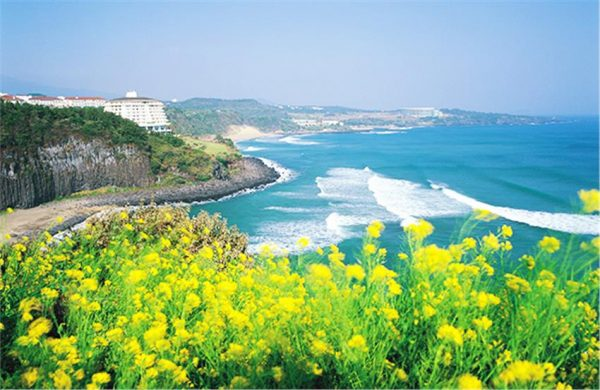Đi Hàn Quốc tháng mấy đẹp nhất ? Nên đi du lịch Hàn Quốc vào tháng mấy?